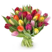 25 разноцветных тюльпана