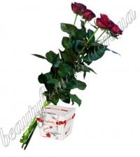 5 роз с Raffaello