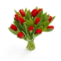 15 тюльпанов (цвет на выбор)