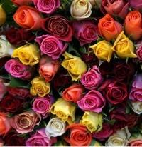 Роза микс