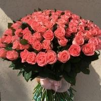 101 метровая розовая роза
