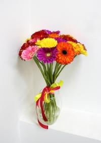 15 разноцветных гербер