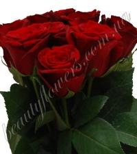 Красная роза 70-80 см