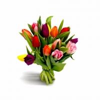 15 разноцветных тюльпанчика